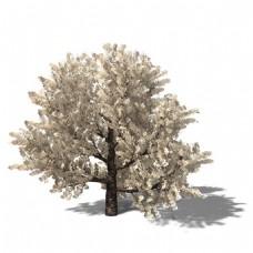 素色茂密大树3d模型