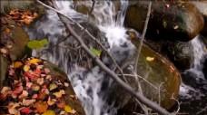溪流从落满叶子的石头上流过动态视频