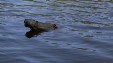 原木在水中的慢速运动