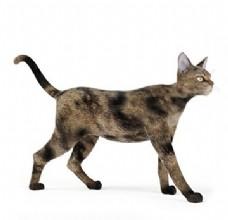 花纹走路猫模型素材