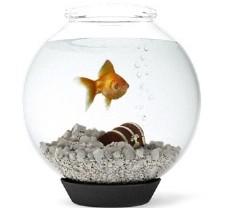圆形鱼缸模型素材