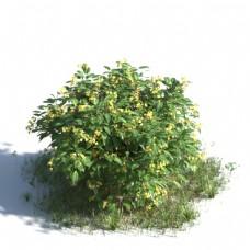 黄色小花草丛模型素材