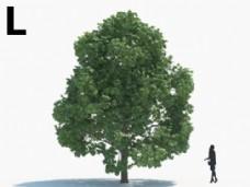 绿色植物绿植模型