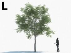 绿色植物模型