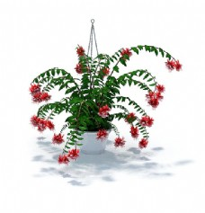 红色吊篮小花3d模型