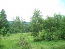 绿色灌木组合模型