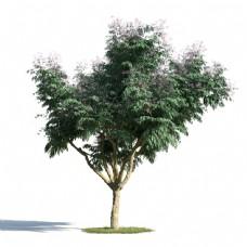 3d树木模型下载