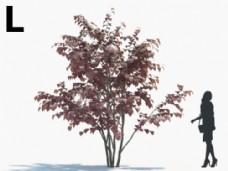 绿化植被模型