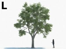 粗干大树模型