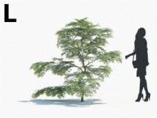 景观树模型