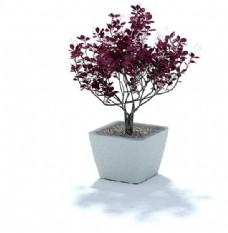 紫色小树盆栽3d模型