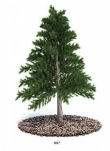 松树模型素材