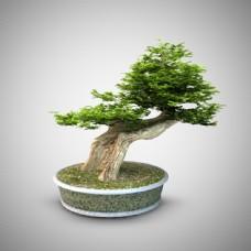 3d渲染绿植盆栽模型下载