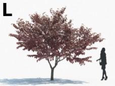 植物模型素材