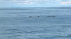 逆戟鲸的POD 2