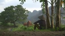 慢镜头看牛吃草