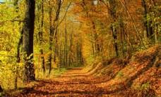 森林里的秋天