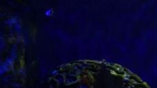 海洋游泳的鱼