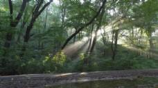 实拍深林里洒向小路的晨光视频素材