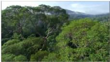 森林动态视频素材
