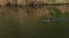 河边风景视频素材
