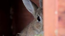 棕色兔子隐藏