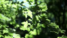 阳光下的绿叶