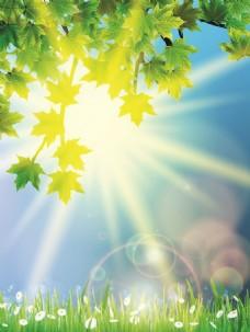阳光树叶矢量合集