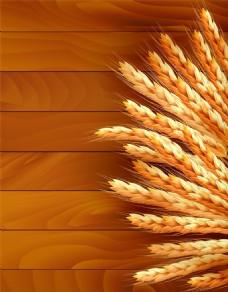 小麦原料矢量图片
