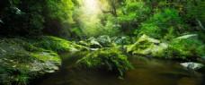 浪漫唯美森林背景