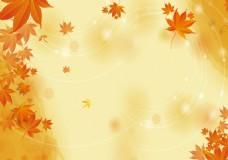 秋季枫叶黄色背景