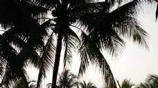 棕榈树的剪影
