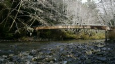 桥和Creek