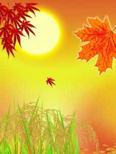 枫叶水稻秋季风景图