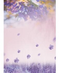 蓝花楹封面背景