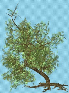 一颗大树免抠png透明图层素材