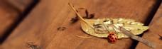 木板上的落叶瓢虫banner背景