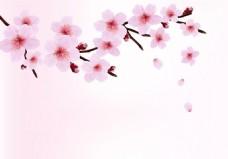 现代 简约 樱花