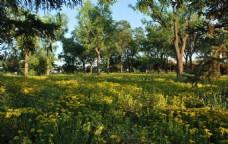 植物园风景图