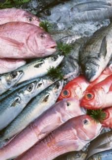 头对头的一堆海鱼