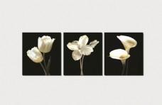 黑底一束花卉图片素材