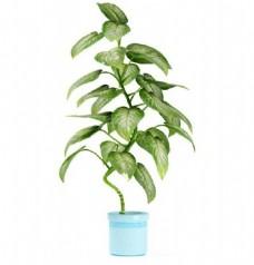 特色造型室内盆栽模型素材